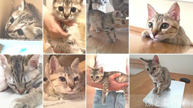 子猫-アイキャッチ